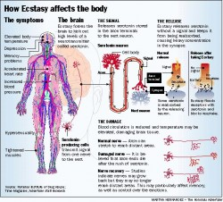 What are the Health Effects of MDMA?
